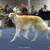CACIB 10/05/2014 Dortmund Germany DOG Show International - FOTO BORZOI