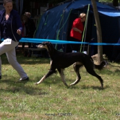 4*CACIB 01-04/05/2014 Croatia Zadar DOG Show 4* International