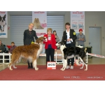 2*CACIB Vilnius 20/21.12.2014 Lithuania SHOW INTERNATIONAL