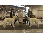 2*CACIB Vilnius 19-20.12.2015 Lithuania SHOW INTERNATIONAL