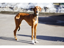 Askia of Breaks Lane