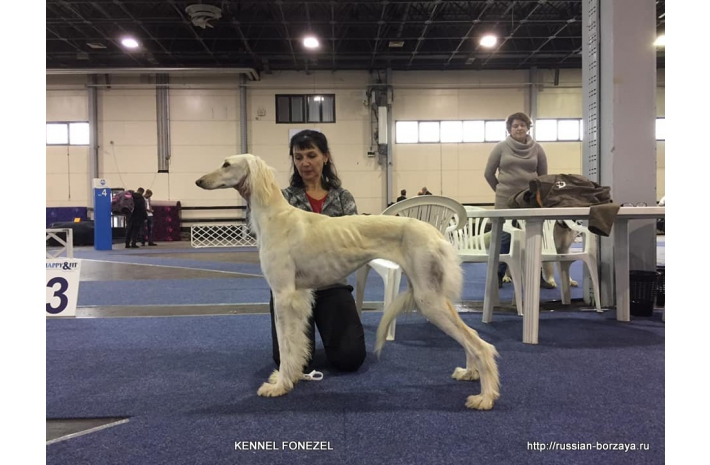 2*CAC National Dog Show 25.11.2018 г