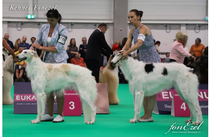 World Dog Show Amsterdam 2018-08-11