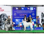 02-03.06.2018 2*CACIB FCI Minsk , Internatiional Dog Show Belarus , 2*Gruft 2019 Qualification