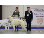 07-08.04.2018 Peterburg  Internatiional Dog Show 2*CACIB FCI (Russia)