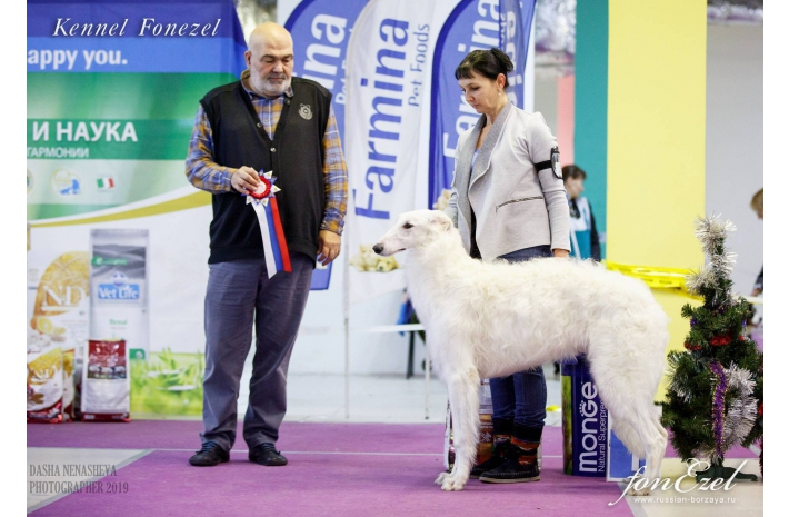 CAC National Dog Show 12.01.2019 г.