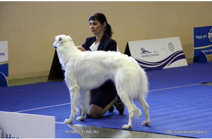 2*CACIB 06-07/01/2018 2* Slovenia Internatiional Dog Show Winner-1 ,2 Celje Gruft 2019 Qualification